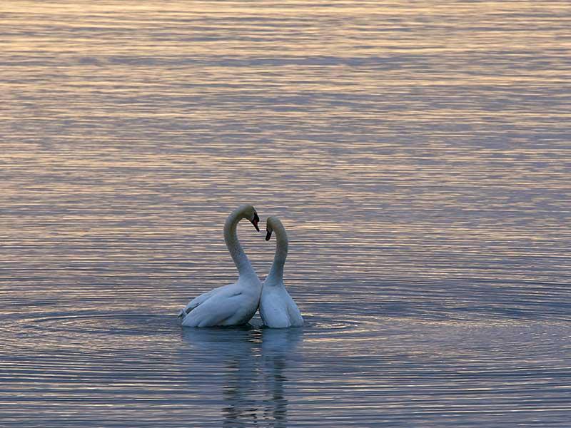 Fate-Silenzio-sull'Amore